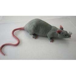 Stretch rat